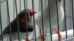 Как сделать клетку для птиц