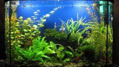 How to prepare water for aquarium