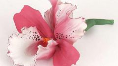 Как рассадить орхидеи