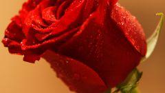 Как подарить цветок девушке