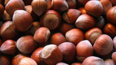 How to grow hazelnut