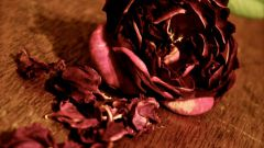 How to dry rose
