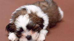 Как чистить собакам уши