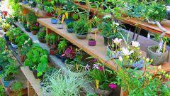 Как выращивать комнатные растения