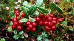 How to make cowberry leaves