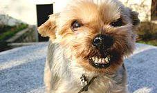 Как почистить собаке зубы