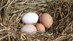 How to make nests for chickens