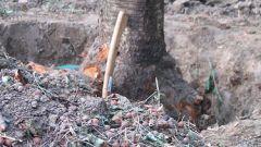 Как удалить старые деревья