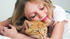Как уговорить родителей купить котенка