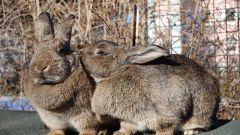 Как распознать кроликов