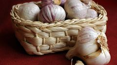 How to preserve garlic in the winter