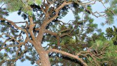 Как сохранить деревья