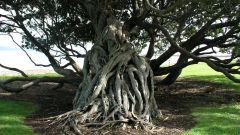 Как сделать декоративное дерево