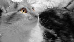 Как сделать подкожно укол кошке