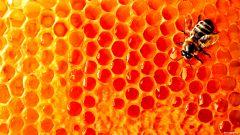 Как проверить мёд на подлинность