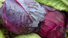 Как сушить капусту