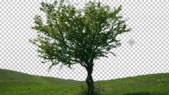 Как убрать задний фон на фотографии