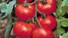 Как вырастить хорошие помидоры