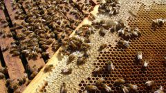 How to make propolis