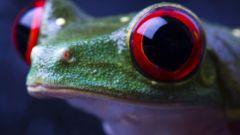 Как лечить покраснение глаз