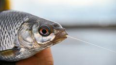 Как сделать резинку для рыбалки