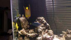 Как выбрать фильтр для аквариума