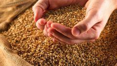 Как вырастить зерно