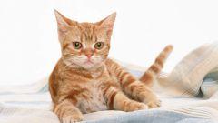 Как приучать котёнка ходить в лоток