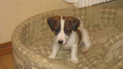 Как приучить щенка к своему месту