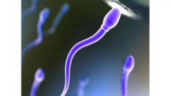 Как сдать анализ на спермограмму