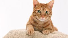 Как сшить лежанку для кошек