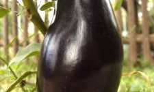 How to remove bitterness from eggplant
