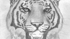 Как рисовать хищника