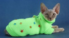 How to knit cat clothes