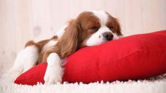 Как приучить щенка спать одного