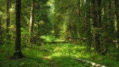 Как защитить лес