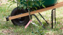 Как сажать плодовые деревья