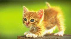 Как приучить кота к еде