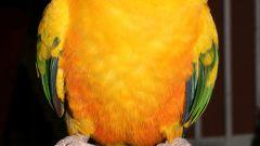 Как учить попугая