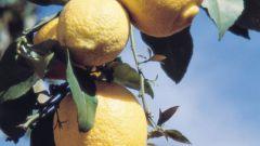 Как размножать лимон