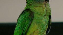 Как узнать, что с попугаем
