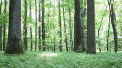 Как вырастить лес