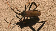 Как играть в жука