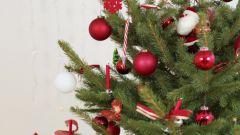 Как продлить жизнь новогодней елке