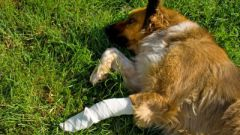 How to stop the bleeding in dogs