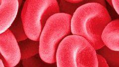 Как повысить эритроциты в крови