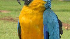 Как воспитать попугая