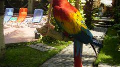 Как быстро научить попугая разговаривать