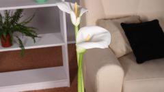 Маленькая квартира: как обставить ее стильно и со вкусом