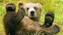 Как назвать медвежонка
